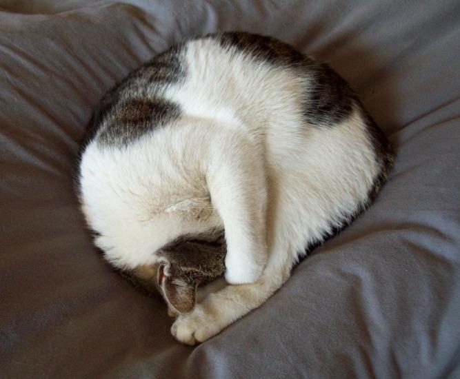 best cat deterrent for gardens